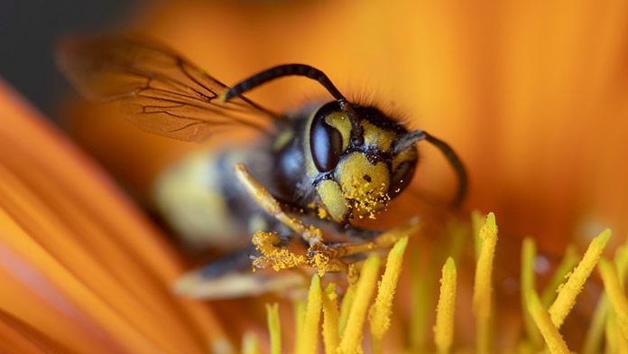Za posledné dni zomreli na Slovensku až 4 ľudia po uštipnutí hmyzom!