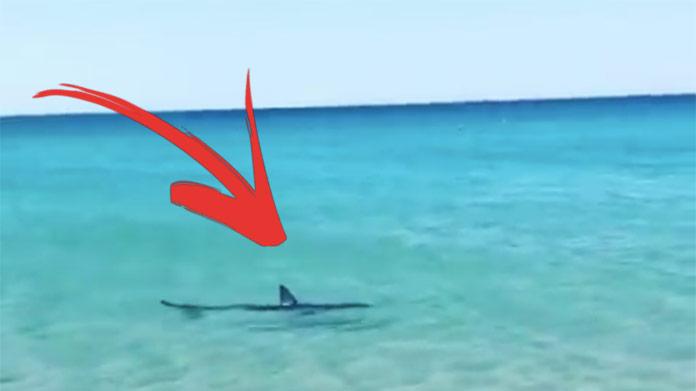 VIDEO: V ďalšej obľúbenej dovolenkovej destinácii Slovákov sa objavil žralok