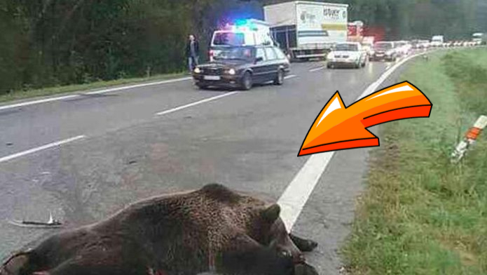 nehoda s medvedom