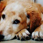 Dojemné video o psej oddanosti vám roztopí srdce. Nič krajšie ste už dlho nevideli!