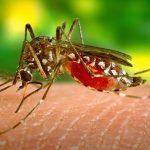 Dovolenkárov straší smrteľný vírus prenášaný komármi: Hrozí v obľúbenej destinácii Slovákov