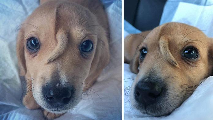 VIDEO Na ulici našli opustené šteniatko: Na hlave mu narástol druhý chvostík