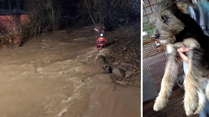 Rieka strhla tri ženy pri záchrane psíkov: Za Zuzkou, Katkou a Zdenkou plačú útulky i ľudia