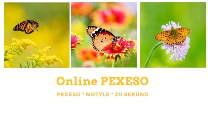 motyle online pexeso peepl